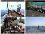 《你所不知道的中国》:中国最大海洋牧场