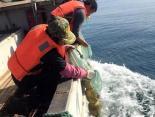 獐子岛香螺底播增殖促进海洋牧场多品种增效