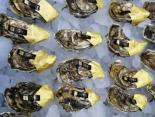 牡蛎产业迎来新生机——大连獐子岛三倍体牡蛎引领牡蛎产业健康可持续发展